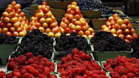 Ősszel elindulhat a magyar gyümölcsfajták exportja Ukrajnába