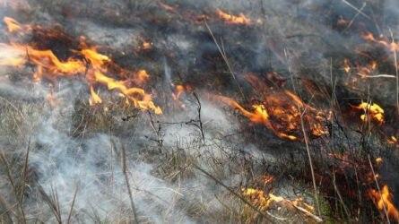 Az égetés, mint alternatív gyepkezelési módszer