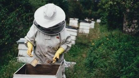 Ismét lehet méhészeti gépjárművekre támogatást kérni