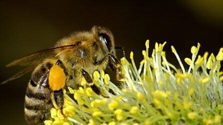 Már csak pár nap maradt méhanya-támogatás igénylésére