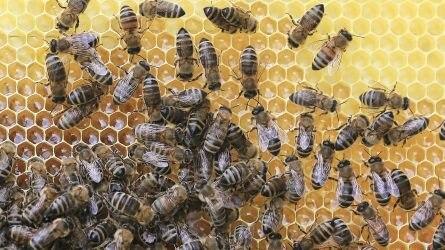 Veszélyt jelent a méhekre a neonikotinoid hatóanyagcsoportú rovarirtó