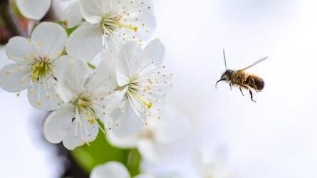 Fontos határidő közeleg a méhbetegségek elleni gyógyszeres védekezés támogatásánál