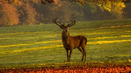 Harminc őz- és szarvastetemet találtak Arad megyében
