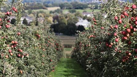 A precíziós termesztési technológiák alkalmazhatósága a gyümölcsösökben