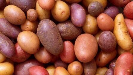 Érdemes burgonyát termeszteni