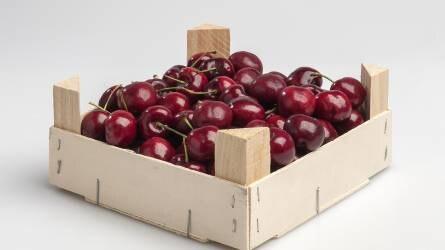 Jó szezon előtt állnak a cseresznye termelők