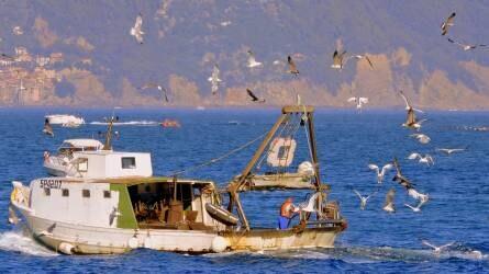 Probléma a tengereken – lélegeztetőgépen a halászati ágazat?