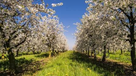 Jogszabályi változások a gyümölcsültetvény-telepítéssel kapcsolatban
