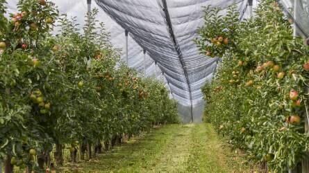 Február 14-én indul a gyümölcsültetvény-összeírás