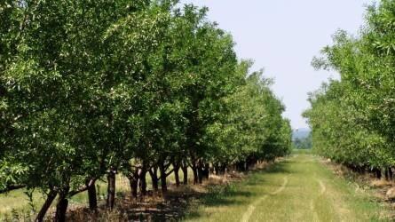 Megnyitja kapuit a Gyümölcstermesztési Kutatóintézet génbanki gyűjteménye