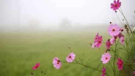 Az AKG-s növényvédőszer-hatóanyagok korlátozása