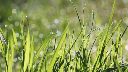 Engedélyezéstől a göngyöleg visszaváltásáig - Növényvédelmi aktualitások az AGRYA rendezvényén