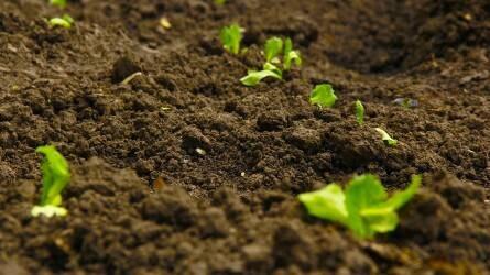 Több mint kétezer hektáron pusztultak ki Tolna megyében őszi vetésű növények