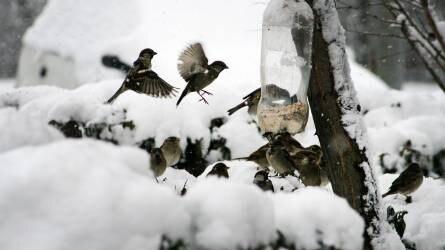 Hólepel alatt az ország, fontos a madarak etetése és itatása