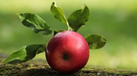 Fontos a megfelelő felvásárlási ár almatermesztés esetében is