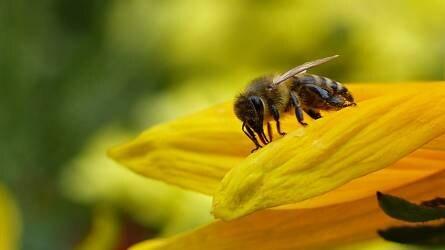 Mézjelentés: túlélési stratégia az ágazatnak