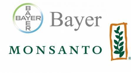A Bayer eladná a zöldségvetőmag részleget a BASF-nek