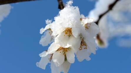 Április közepéig jelenthető be a téli fagykár