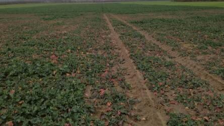 Együttműködik az agrárium fejlesztésében az MFB és a Nemzeti Agrárgazdasági Kamara