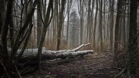 Hétfőn indul az idei utolsó erdészeti szakszemélyzeti továbbképzés
