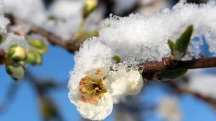 Agrometeorológia: visszatérő hó és fagy okozhat komoly károkat