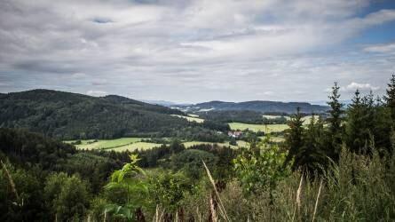 Több mint hetven milliárdot költöttek az erdők megújulására