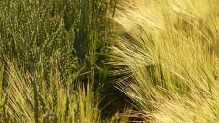 Terménypiac: a természet még nem, de a jegyzések a múlt héten zöldbe borultak