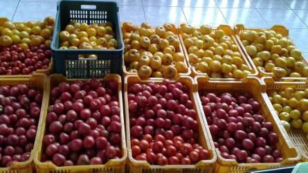 Szabadföldi zöldségtermesztés a hétvégi telkünkön talajtakarással