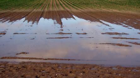 Terménypiac: esik az eső és emiatt az árak is – kivéve itthon!
