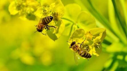 Óvatosan a permetezéssel: kiemelt ellenőrzések a méhek védelmében