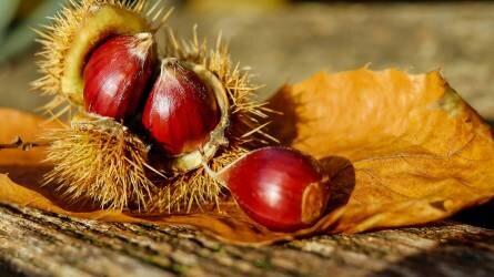 Dió, mandula, mogyoró, szelídgesztenye - A héjas termésűek helyzete Magyarországon