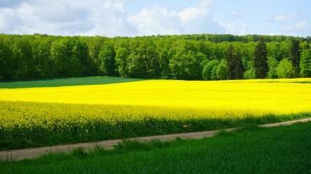 Terménypiac: a vetés van a termelők gondolatainak középpontjában