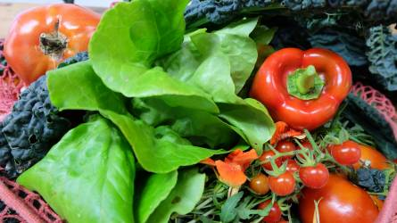 Magyarország a világ élmezőnyében - Az élelmiszer-termelésünk fenntartható