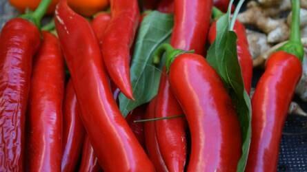Május 1-től igényelhető a fűszerpaprika-termelők de minimis támogatása