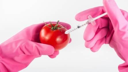 A GMO-mentesség hozzájárul a versenyképességhez