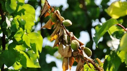 Ez már igazi növényvédelmi szezon a szántókon és a gyümölcsösökben is