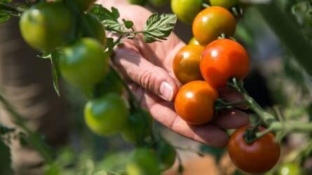 Kutatás és fejlesztés a jövő biológiai növényvédelméért
