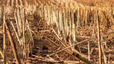 Mikroorganizmusok a mezőgazdaság szolgálatában, a szárbontás jelentősége