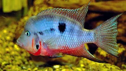 Így jutnak sikeresen célba a halspermiumok