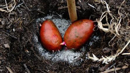 Mikorrhiza: miként lehet hasznos a biológiai növényvédelemben?