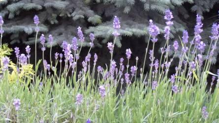 Örökké zölden – örökzöld növényeink gondozása és védelme hónapról hónapra I. rész