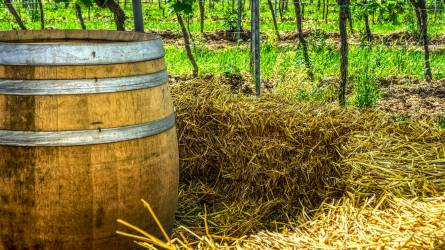 A jobb minőségű borok előállításának kulcsa a szerkezetátalakítás lehet