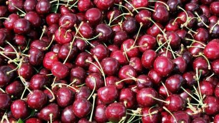 Nem kímélik a károsítók a szőlőt, zöldséget, gyümölcsöt sem
