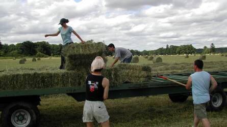 Tájékoztató a diákok mezőgazdasági idénymunka vállalásáról