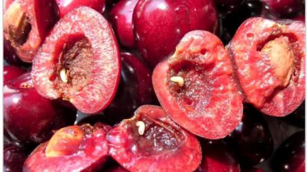 Mit tehetek a kukacos cseresznye ellen?