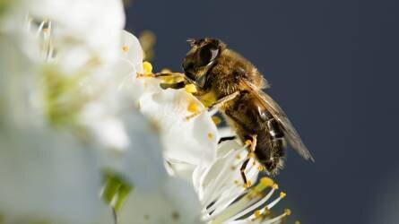 Újfajta stratégiával megmenthetőek a méhek
