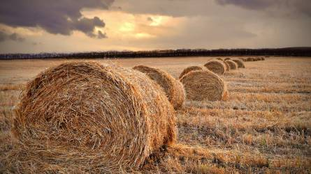 Rekordteljesítményt érhet el a mezőgazdaság