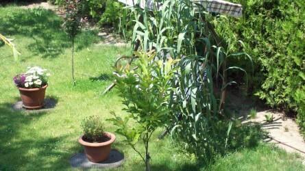Második esély – ötletek a kert és udvar megújításához és szépítéséhez újrahasznosítással I. rész
