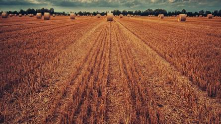 A hat tonnát is meghaladja az őszi búza termésátlaga Tolna megyében