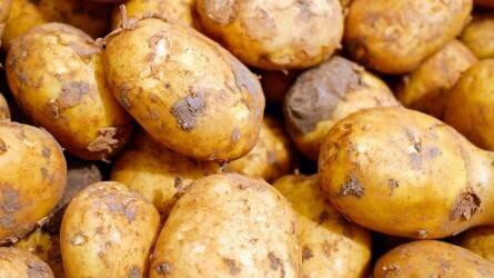 Drámaian csökkentek a zöldségfélék hozamai - Ennyibe kerül a burgonya, a káposzta, a sárgarépa és a hagyma